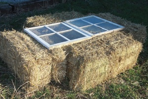 straw-bale-cold-frame1